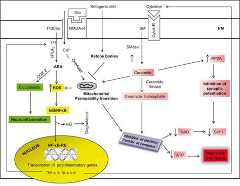 effects  diet exercise  sleep  brain