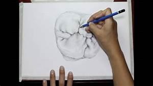 Drawing A First Upper Molar    By Vassnia Nizama