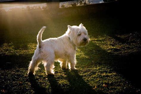 symptoms     dog  heat tail  fur