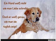 Ein Hund weiß nicht wie man Liebe schreibt Lustige