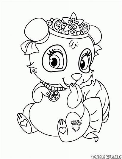 Panda Coloring Pages Blossom Pets Colorkid