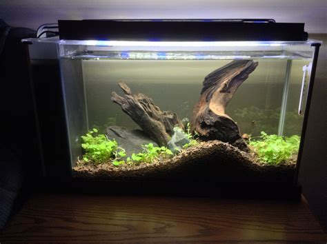 fluval spec v aquascape fluval spec v with hydrocotyle sibthorpioides my own