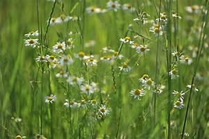 Garten Pur Forum : spaziergang im juni 2016 ~ Lizthompson.info Haus und Dekorationen