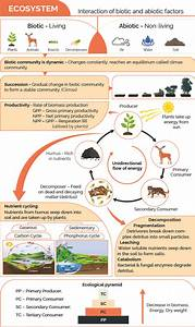Components Of Ecosystem  Biotic  Abiotic Components