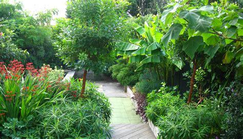 subtropical garden design ideas sub tropical garden lucy sommers gardens