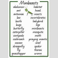 Minibeasts Vocabulary Words K3 Teacher Resources