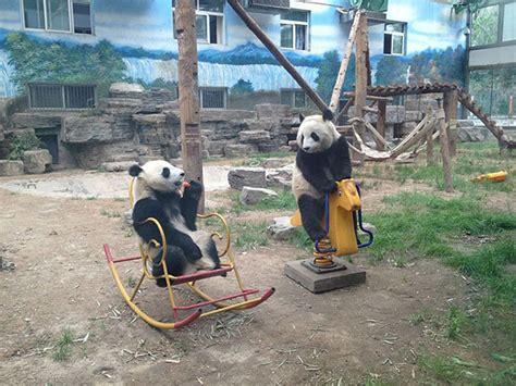 22 Animals That Forgot They Were Animals  Bored Panda