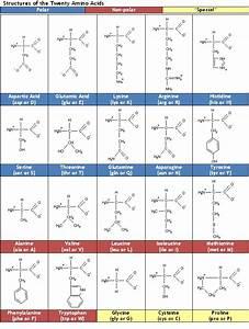 Proteins - Diamantina Institute - University of Queensland