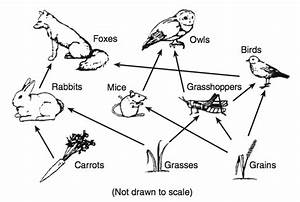 Human Food Web Diagram