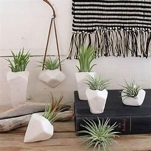 Pflanzen Fürs Bad Ohne Fenster : pflanzen pflege luftpflanzen als tolle dekoration ~ Frokenaadalensverden.com Haus und Dekorationen