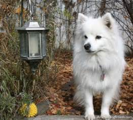 large breeds of dogs breeds information about breeds breeds picture