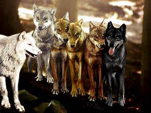 Game Of Thrones ~ the dire wolves by Onif on DeviantArt