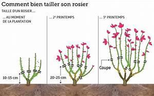 Comment Tailler Les Rosiers : pour tous ~ Nature-et-papiers.com Idées de Décoration