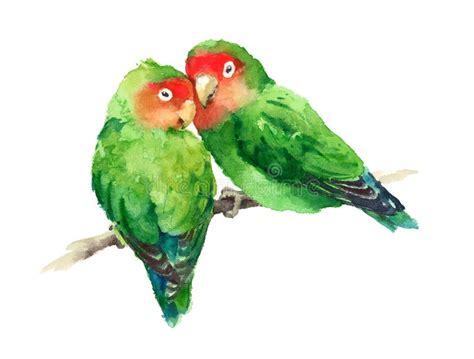 lovebirds watercolor exotic bird love illustration