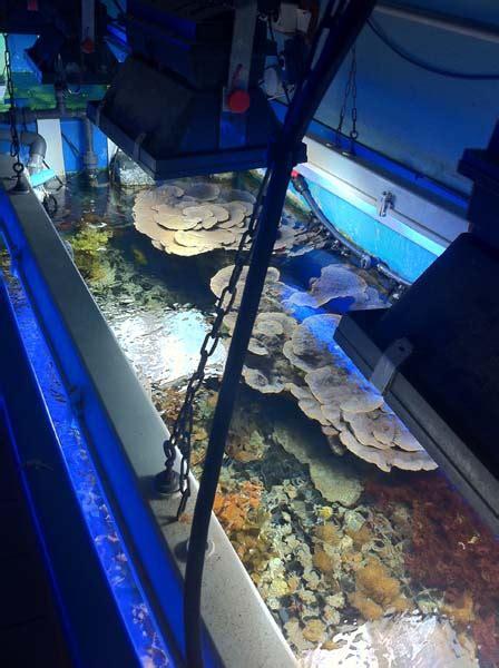 aquarium marin du cap d agde aquarium marin du cap d agde 28 images les coulisses de l aquarium du cap d agde aquarium r