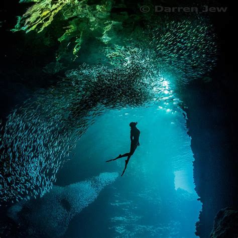 Underwater Dive - learn to dive gold coast underwater photography courses