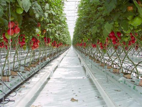 fonds de cuisine tomate la culture hors sol dossier