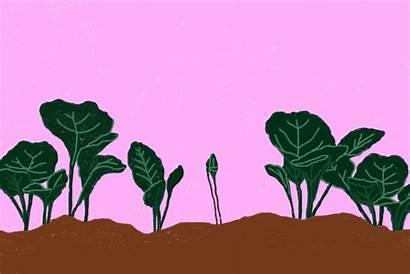 Greens Grow Times Collard Growing Eat Collards