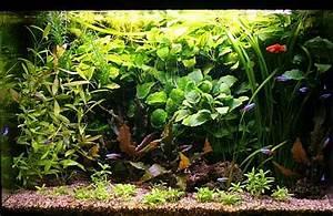 Aquarium Gestaltung Bilder : aquaristik ~ Lizthompson.info Haus und Dekorationen