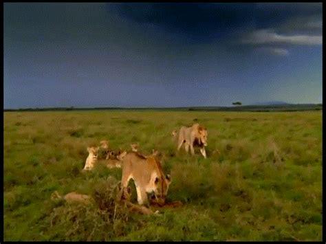paisajes animados paisaje animado de animales 2 manada