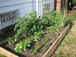 Home vegetable gardens the interior designs for Home vegetable garden