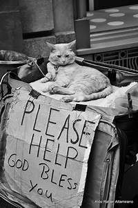 Homeless cat | Aldo Altamirano | Flickr