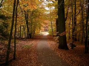 Kostenlose Bilder Herbst : herbst wald autumn leaves bilder24 ~ Yasmunasinghe.com Haus und Dekorationen