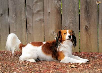Breeds Dog Uncommon Ten Heard Might Pets4homes
