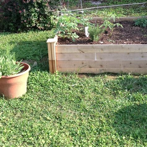 raised herb bed my first raised bed and herb garden herb gardening pinterest gardens herbs and beds