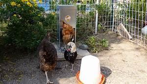 Comment élever Des Poules Pondeuses : nourrir mes poules pondeuses ~ Dode.kayakingforconservation.com Idées de Décoration
