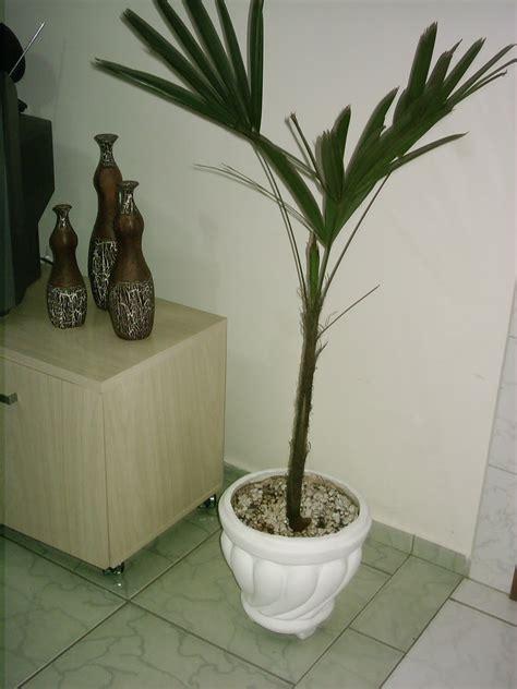 ENTRE E SINTA-SE EM CASA: Coloque plantas na sua casa!