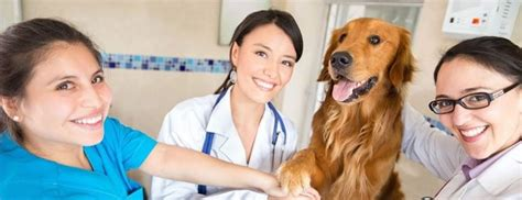 Veterinarian Answering Service  Continental Message. Can Dehydration Cause Eye Problems. What Is The Cheapest Car Insurance Company. Audiobooks Online Streaming Free. How To Buy Stocks For Kids Event Photo Cards. Legal Malpractice Lawsuit Car Protection Plan. How To Find If A Domain Name Is Available. Hurricane Shutters Miami Fl Hosted Pbx Voip. Electric Baseboard Heating Systems