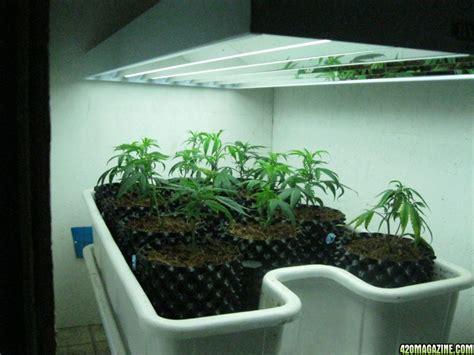grow ls home depot fluorescent lighting fluorescent grow lights home depot