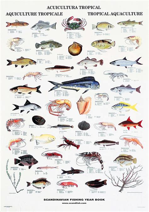 tropical fish  shellfish poster unique  beautiful