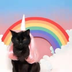 cat a unicorn cat unicorn