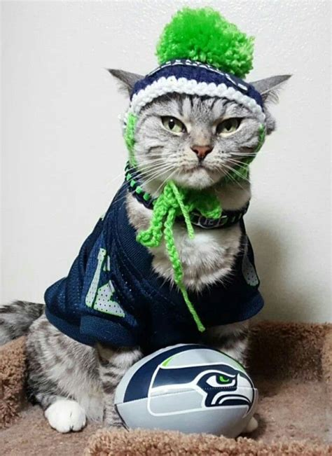 seahawk animals images  pinterest seattle