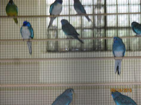 Bilder Von Unseren Vögeln