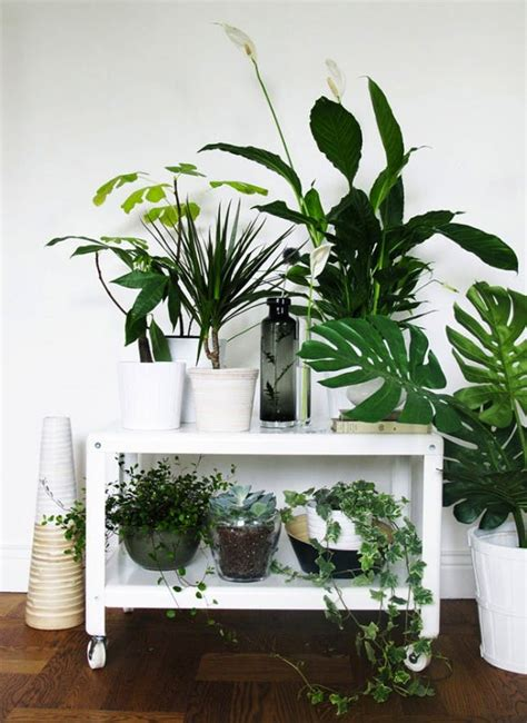 25 unexpected ways to decorate with plants brit co