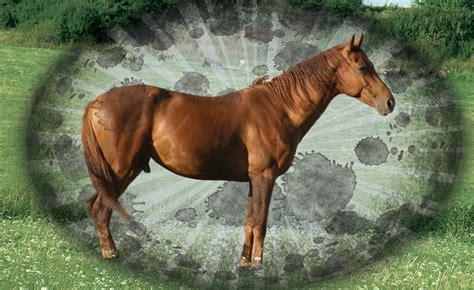 Energie Fürs Pferd