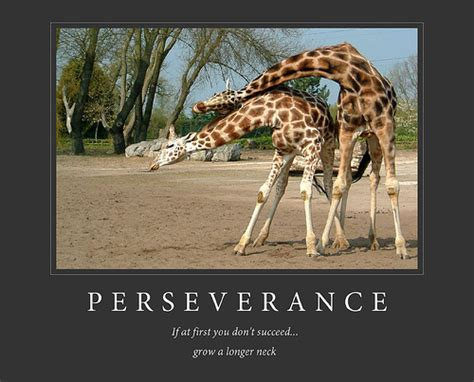 funny image clip funny demotivational posters animals images