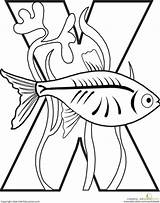 Coloring Letter Alphabet Ray Animal Fish Pages Xray Letters Preschool Worksheet Worksheets Drawing Education Abc Animals Printables Colouring Crafts Sheet sketch template