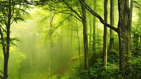 Background Greenery Wallpaper by High Quality Hd Wallpapers Greenery