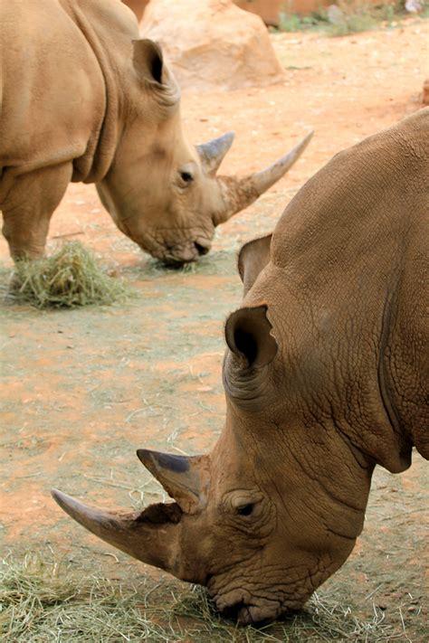 zoo johannesburg encyclopedia asp za wikipedia information