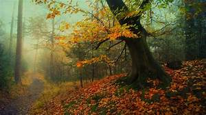 Nature, Landscape, Forest, Path, Fall, Leaves, Mist, Trees, Moss, Roots, Grass, Morning