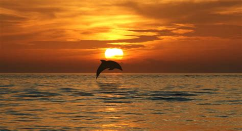 Dolphin Intertrade Corporation - Miami , Florida 33186 USA