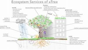 Servicing Those Ecosystems  The Value Of Trees