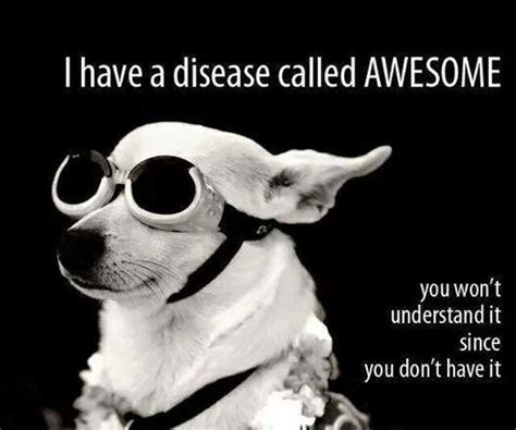 Memes About Being Awesome - being awesome funny pictures quotes memes jokes