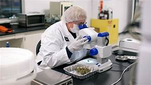 Why the GOP Is Pushing For Medical Marijuana Research ...