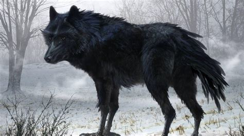 Black Wolf Wallpaper by Black Wolf Wallpapers Wallpaper Cave