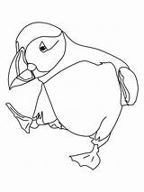 Puffin Coloring Dancing Printable Adults Pages Puffins sketch template
